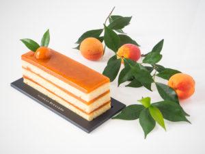 Cake aux abricots sur un fond blanc